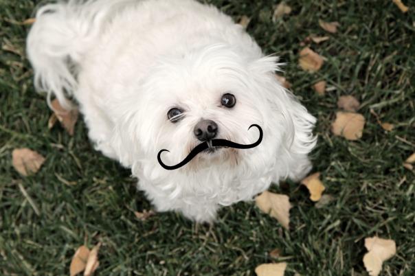 Mustache Missy