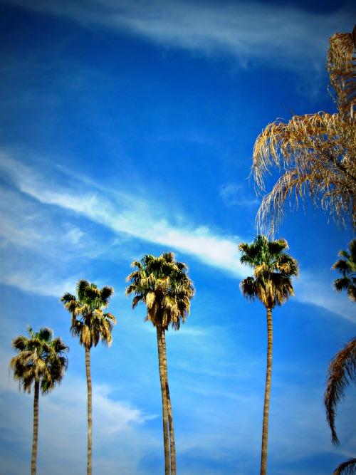 Tucson Palms