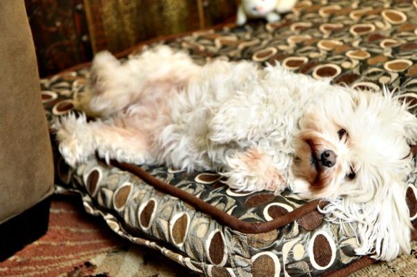 Missy Resting