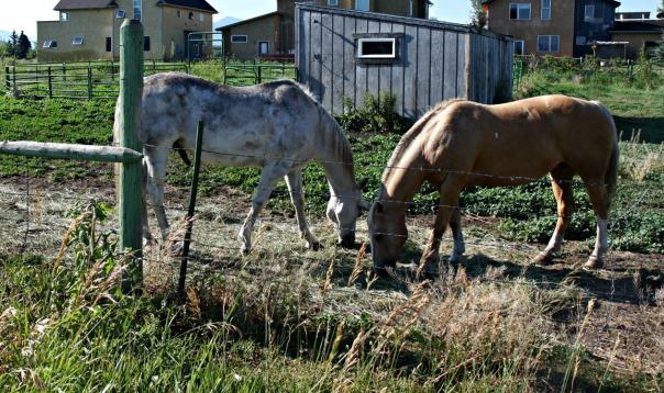 Gallatin Rec Area horses (stronglikemycoffee.com)