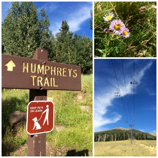 Humphreys collage