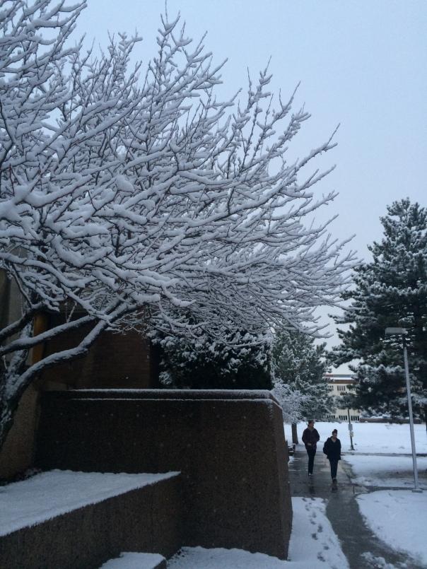 Winter Wonderland in Flagstaff (stronglikemycoffee.com)