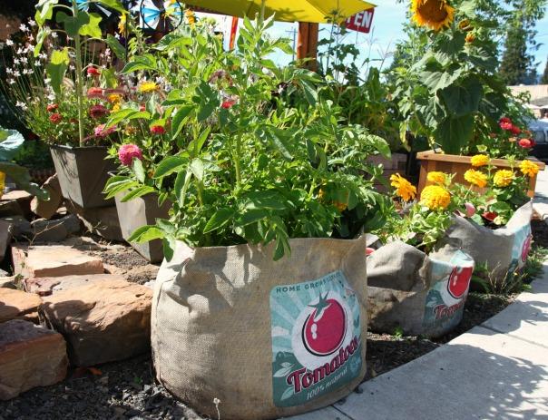 Huckleberry Festival Garden Stronglikemycoffee.com