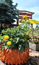 Huckleberry Festival Idaho Garden Stronglikemycoffee.com