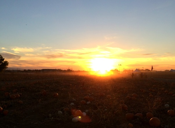 farmstead-sunset-2-stronglikemycoffee-com