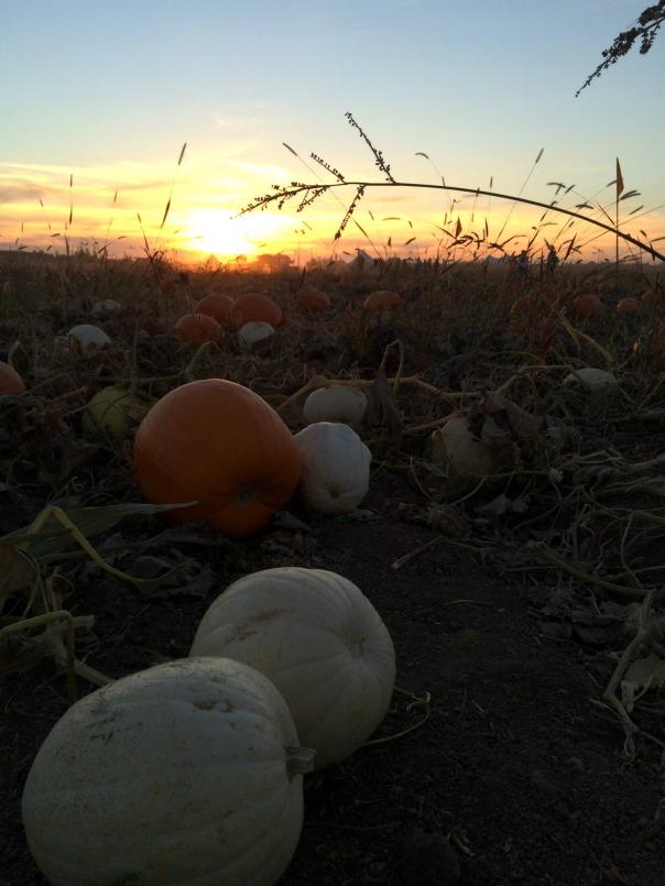 farmstead-sunset-stronglikemycoffee-com